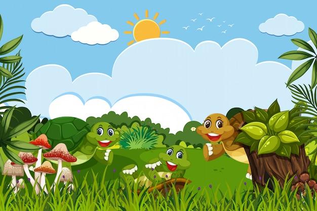 Spaßschildkröten in der naturszene