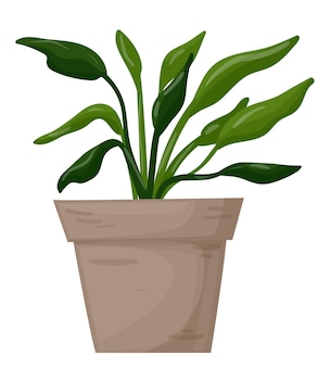 Spathiphyllum in einer dekorativen heimpflanze des topfes auf einem weißen hintergrundvektorillustrationsvektor