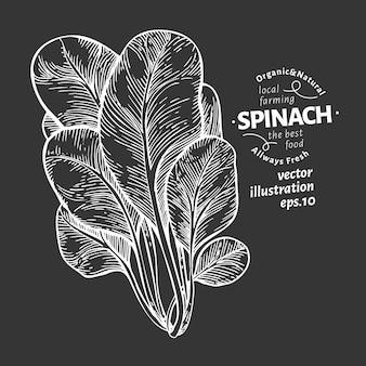 Spinat verlässt illustration. hand gezeichnete gemüseillustration auf kreidebrett. gravierter stil.