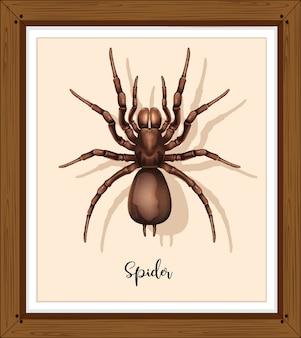 Spinne auf gewebtem rahmen