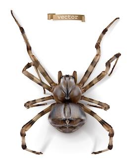 Spinne, realistischer vektor hoher qualität