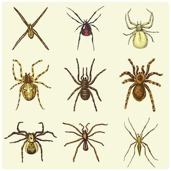 Spinnen- oder spinnentierarten, gefährlichste insekten der welt, alter jahrgang für halloween- oder phobie-design. hand gezeichnet, graviert kann für tätowierung, web und gift schwarze witwe, vogelspinne, vogelfresser verwenden