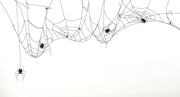Spinnen und spinnennetz, vektorsatz