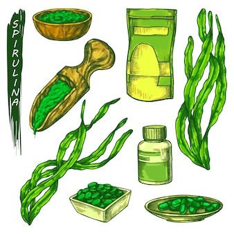 Spirulina-symbole stellen algenskizze in farbe ein