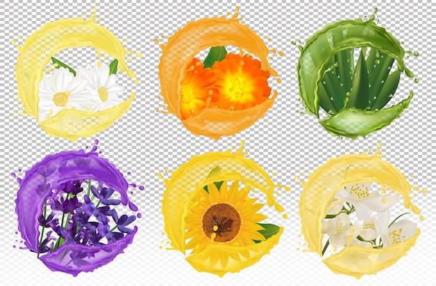 Spritzer flüssigkeit auf kamille, ringelblume, lavendel, aloe vera, sonnenblume, jasmin.