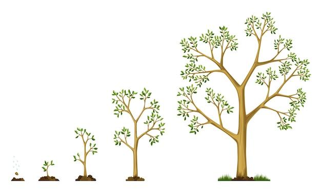 Stadien das wachstum des baumes aus samen. gießen der samen. sammlung von bäumen von klein bis groß. grüner baum mit blattwachstumsstufen. illustration der entwicklung des konjunkturzyklus.