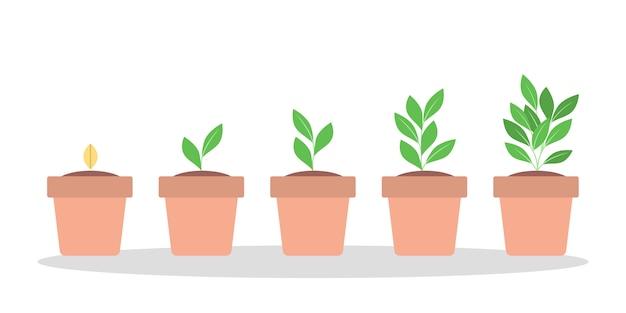 Stadien des grünen pflanzenwachstums im roten topf.
