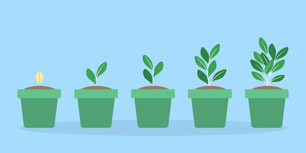 Stadien des grünen pflanzenwachstums im topf. vom samen bis zum großen spross.