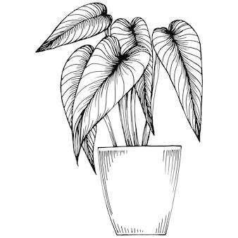 Startseite pflanze in töpfen skizze. umrisszeichnung isolierte darstellung von wachsenden blumen in einer hängenden pflanze für die innen- oder bürodekoration. von gartenblumen.
