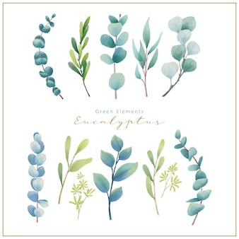 Stellen sie aquarell-eukalyptusblätter ein