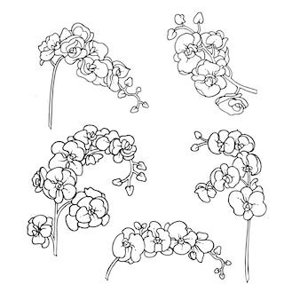 Stellen sie das umrissdesign des orchideenstraußes ein