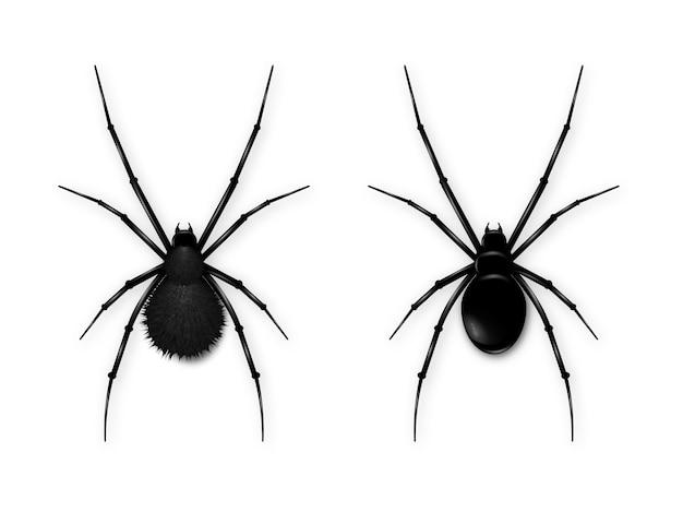 Stellen sie die schwarze spinne ein, die auf weißem hintergrund lokalisiert wird.