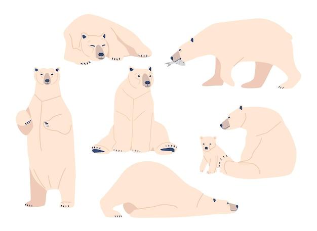 Stellen sie weißbär, wild polar arctic animal predator in verschiedenen haltungen ein. mutter mit jungtier, nordpol-kreatur mit weißem fell, isolierter zoo-bewohner stehen, sitzen und liegen. cartoon-vektor-illustration
