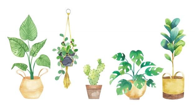 Stellen sie zimmerpflanzen in töpfe, die in aquarell gemalt werden. topfpflanzen gesetzt. vektorillustration