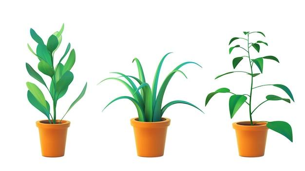 Stellen sie zimmerpflanzenchlorophytum und ficus im topf ein, realistische baumvorderansicht. grün der illustration 3d der zimmerpflanze lokalisiert auf weißem hintergrund.