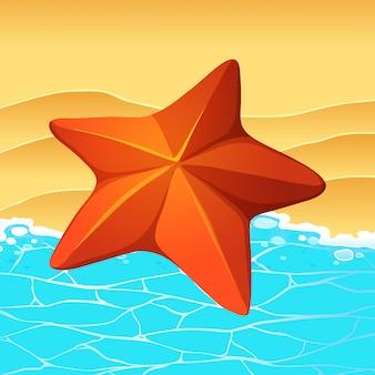 Sternfisch am strand