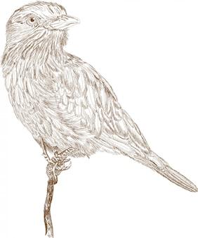 Stich-illustration des vogels