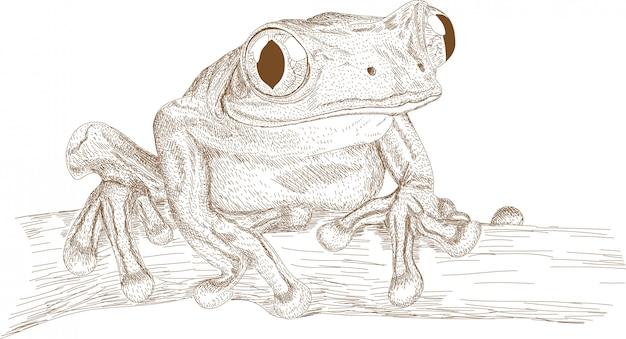Stich-zeichnungs-illustration des frosches