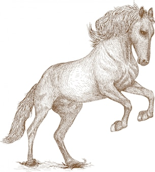 Stich-zeichnungs-illustration des pferds