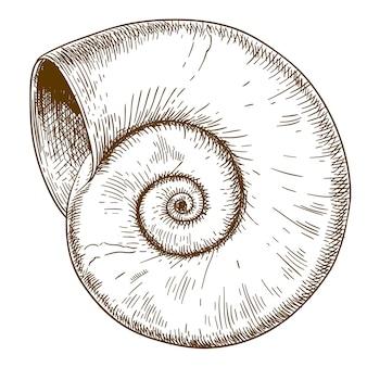 Stichillustration der spirall-muschel