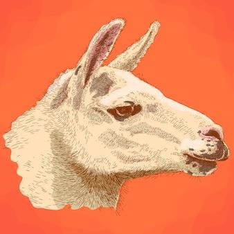 Stichillustration des lamakopfes im retrostil