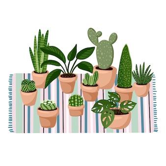 Stilvoller scandic wohnzimmerinnenraum - saftige topfpflanzen auf teppich.