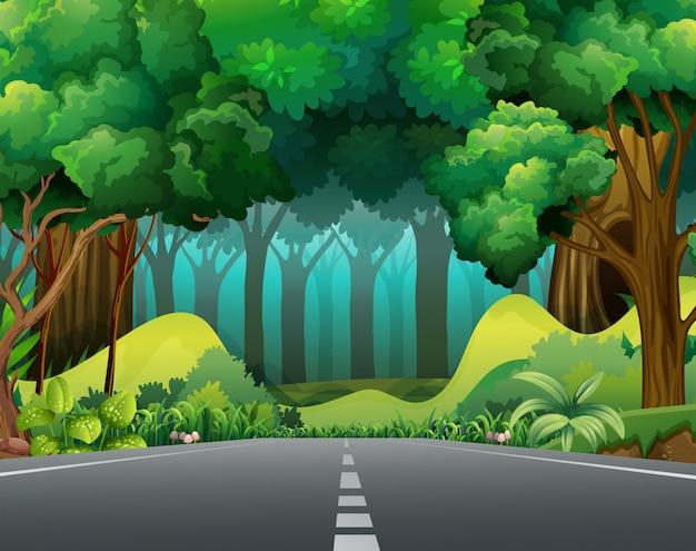 Straße in den wald