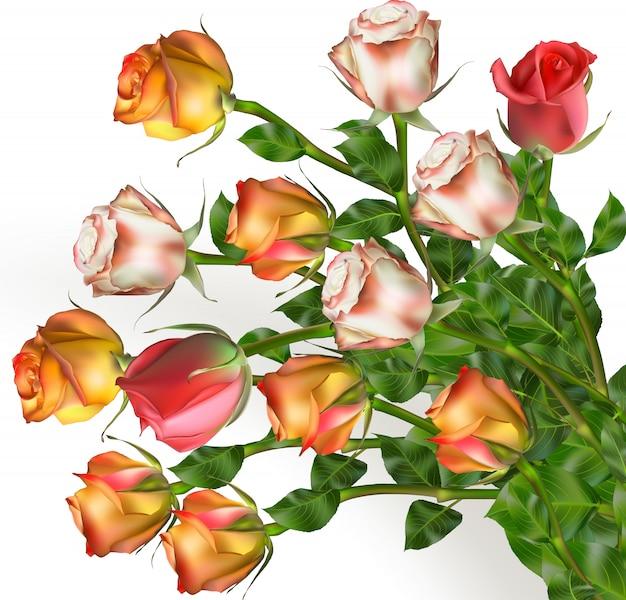 Strauß rosenblüten auf weiß.