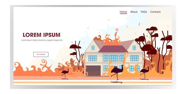 Strauße der australischen tiere, die von waldbränden in australien verheerendem brennendem naturkatastrophenkonzept des horizontalen kopierraums des naturkatastrophenkonzepts der intensiven orangefarbenen flammen laufen