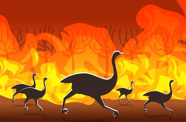 Strauße, die von den waldbränden in australien-tieren sterben in den intensiven orange flammen des waldbrand-brennenden baumnaturkatastrophenkonzeptes horizontal laufen
