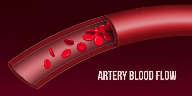 Stromfluß der roten blutkörperchen der arterie, gefäß.