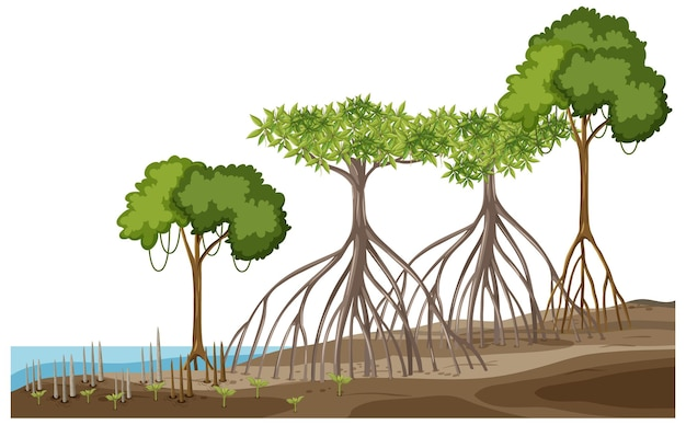 Struktur des mangrovenwaldes auf weiß