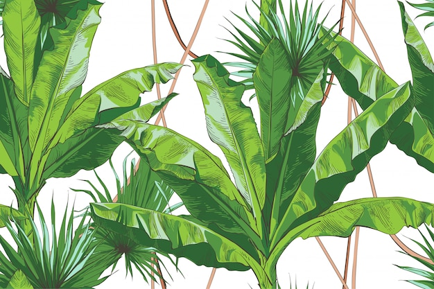 Strukturelles nahtloses muster der tropischen bananen-palme des vektors.