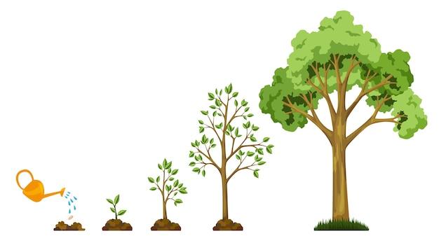 Stufen des baumwachstums aus samen. die pflanzen gießen. sammlung von bäumen von klein bis groß. grüner baum mit blattwachstum. konjunkturzyklusentwicklung.