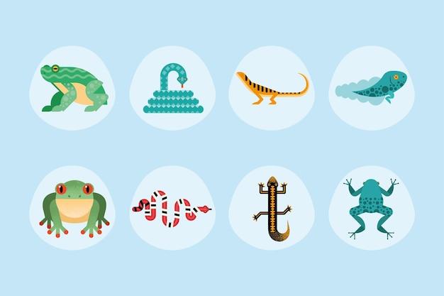 Süße acht amphibien