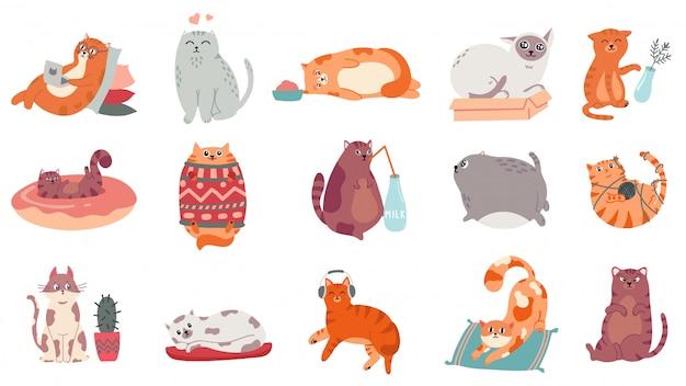 Süße katzen. lustige katze im kasten, entzückendes schlafendes kätzchen und fette katze im pulloverillustrationssatz. lebensstil von haustieren. comic-haustier, das am laptop arbeitet, yoga macht, musikaufkleber hört
