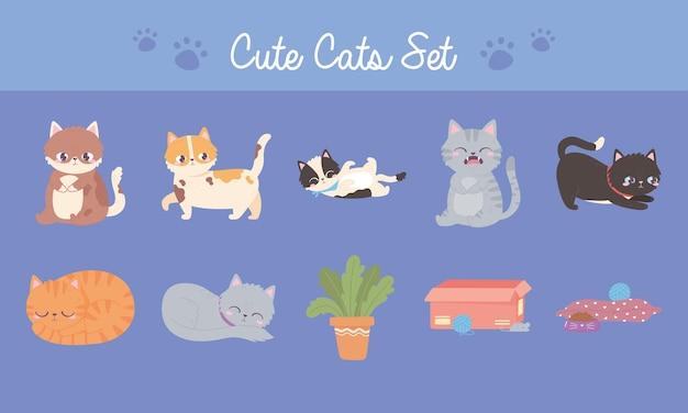 Süße katzen setzen