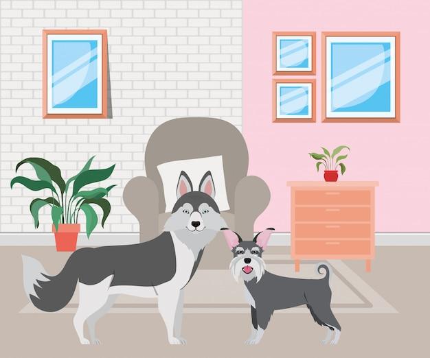 Süße kleine hunde im wohnzimmer