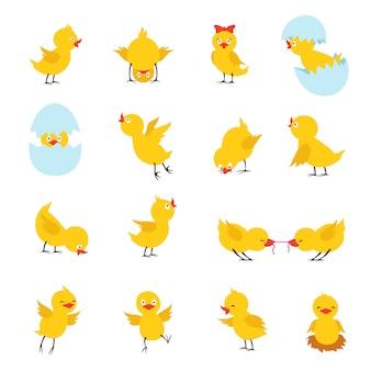 Süße küken. cartoon ostern baby hühner mit eiern. lustige gelbe kükencharaktere