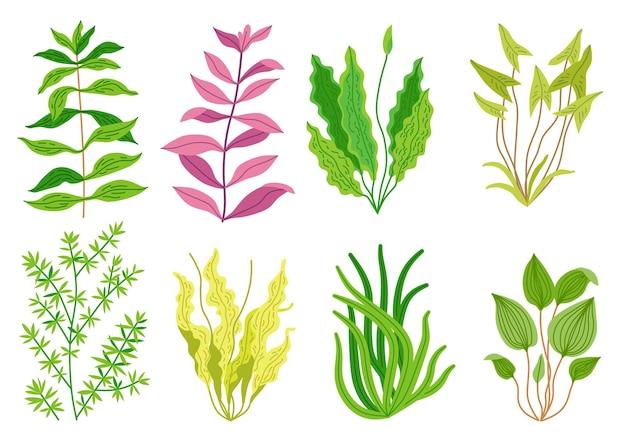 Süßes cartoon-aquarium-algen-set