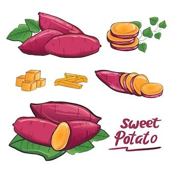Süßkartoffel illustrationszeichnungs-vektorsammlungssatz