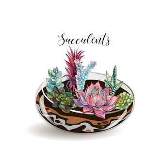 Sukkulenten in einem dekorativen aquarium für blumen