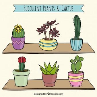 Sukkulenten-kaktus-sammlung