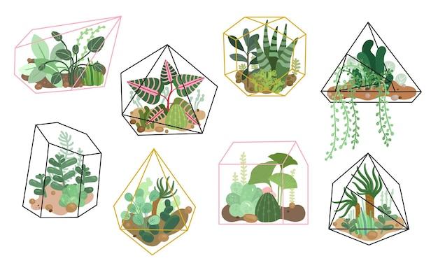 Sukkulenten pflanzen. stilvolles blumendekor, hausgarten. moderne natürliche innendekoration, kaktuspflanzung. isolierte vegetation gesetzt. illustration zimmerpflanze blumige, botanische pflanzvegetation
