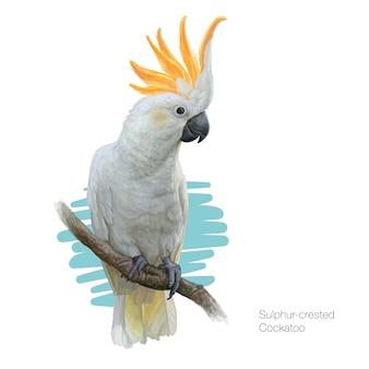 Sulphurcrested cockatoo detaillierte darstellung