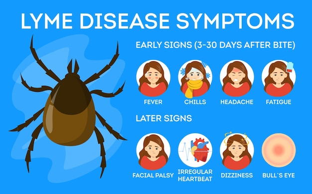 Symptome der lyme-borreliose. gesundheitsgefahr durch zecke
