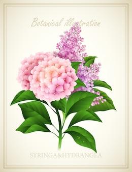 Syringa und hortensie. botanische vektorillustration