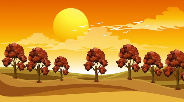 Szene mit bäumen im feld bei sonnenuntergang