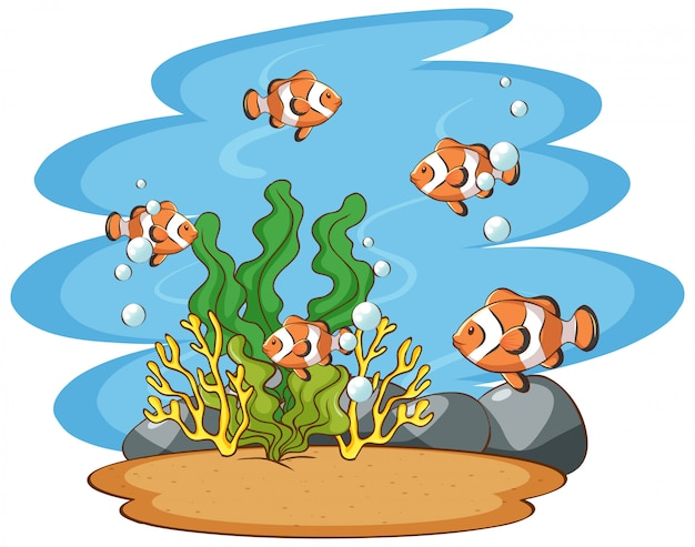 Szene mit clownfish im meer