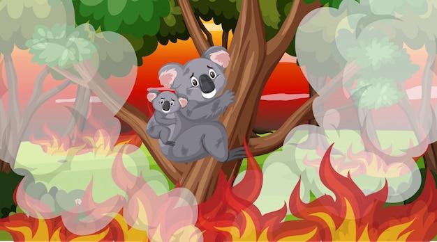 Szene mit großem verheerendem feuer mit den koala eingeschlossen im wald